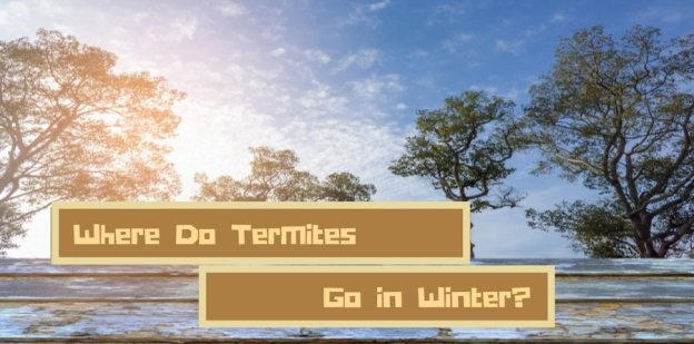 Termites-sign.GriffinPests