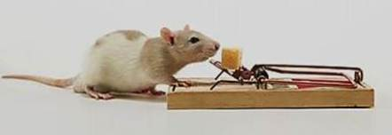mouse-at-mousetrap