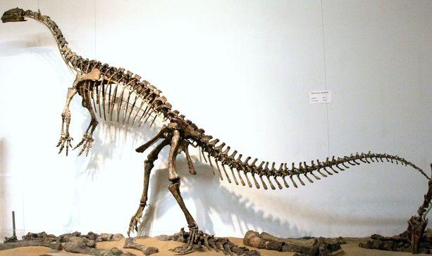 Plateosaurus-skeleton-Tubingen.Wikipedia