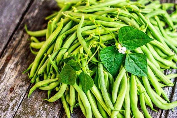 GreenBeans-Phaseolus-vulgaris.GardenersPath