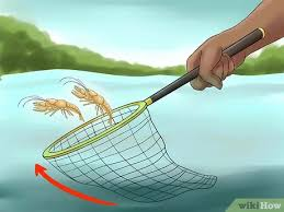 Crayfish-catching-with-Net.WikiHow