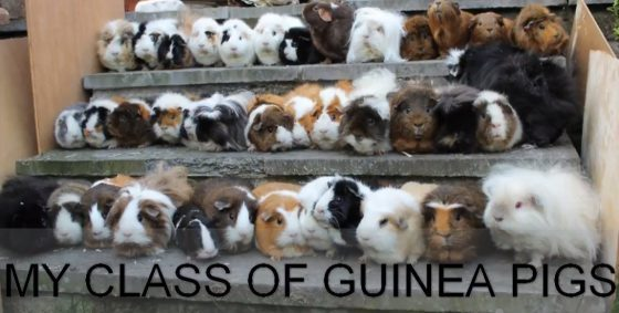 GuineaPig-class.Joel-Speranza
